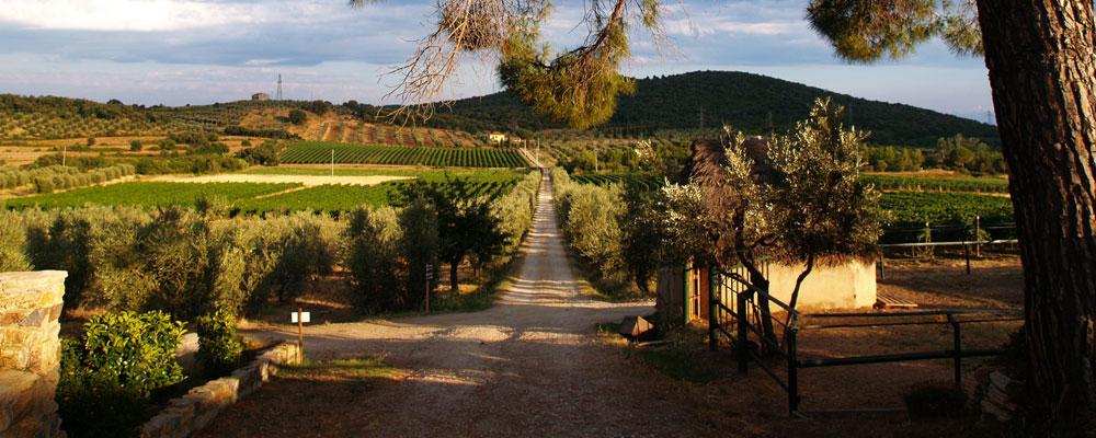 Vacanza campagna Toscana Suvereto