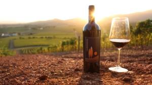 degustazione vino bulichella